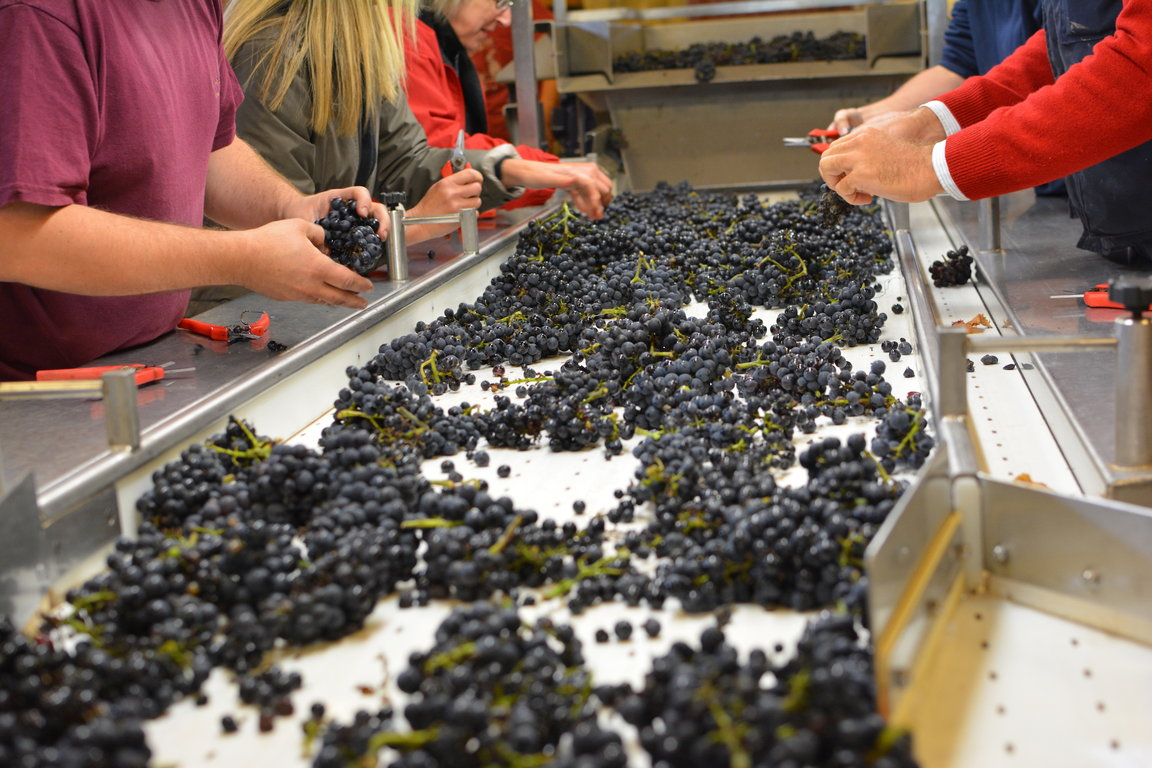 Domaine Jacques Prieur Sorting Table