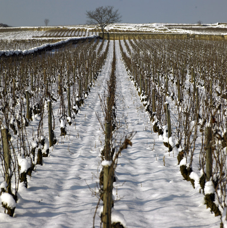 Domaine Jacques Prieur Vineyard under snow